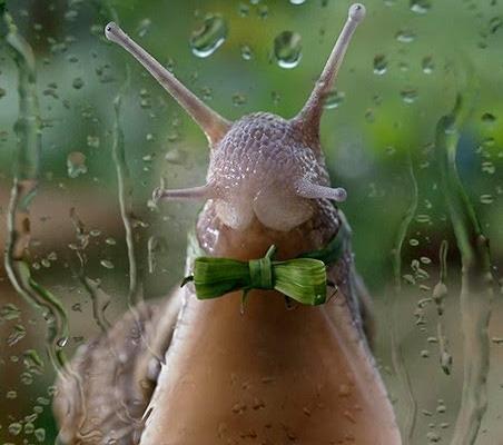 snails23