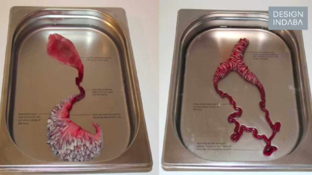 Organs envisioned by Agi Haines - Electrostabilis Cardiuma (left) Cerebrothrombal Dilutus (right)