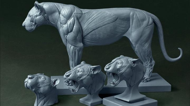 Jun Huang\'s 3D Printed Big Cat Anatomy Models a Smashing Kickstarter ...