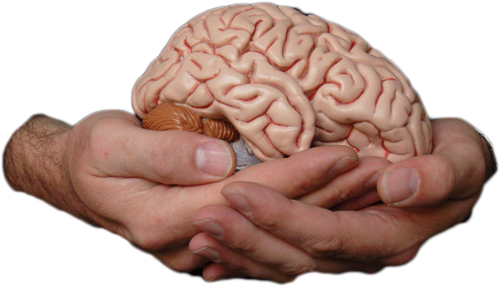 Are 3D Printed Brains & Artificial Intelligence On The Horizon?