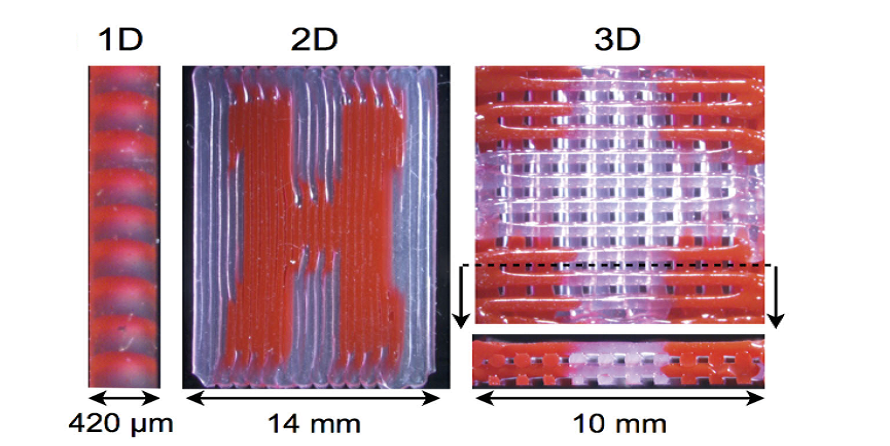 Researchers Describe Method of 3D Printing Multiple Viscoelastic Inks from Single Print Head