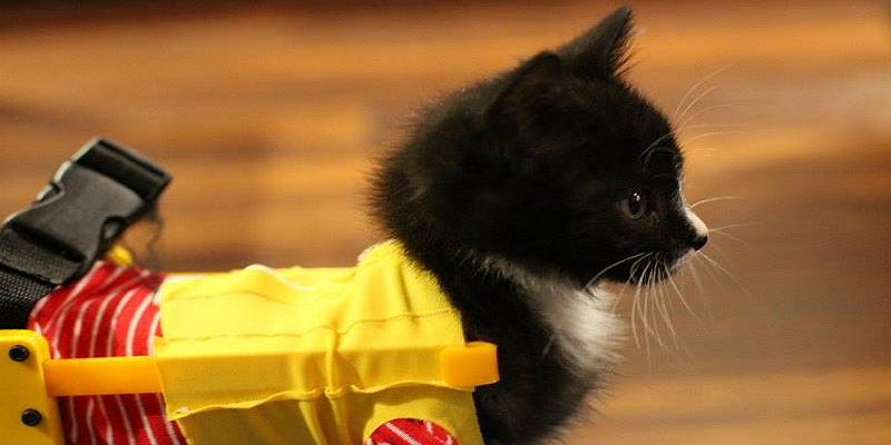 Paralyzed Kitten Gets a 3D Printed Wheelchair Courtesy of Hacker Collective SubProto