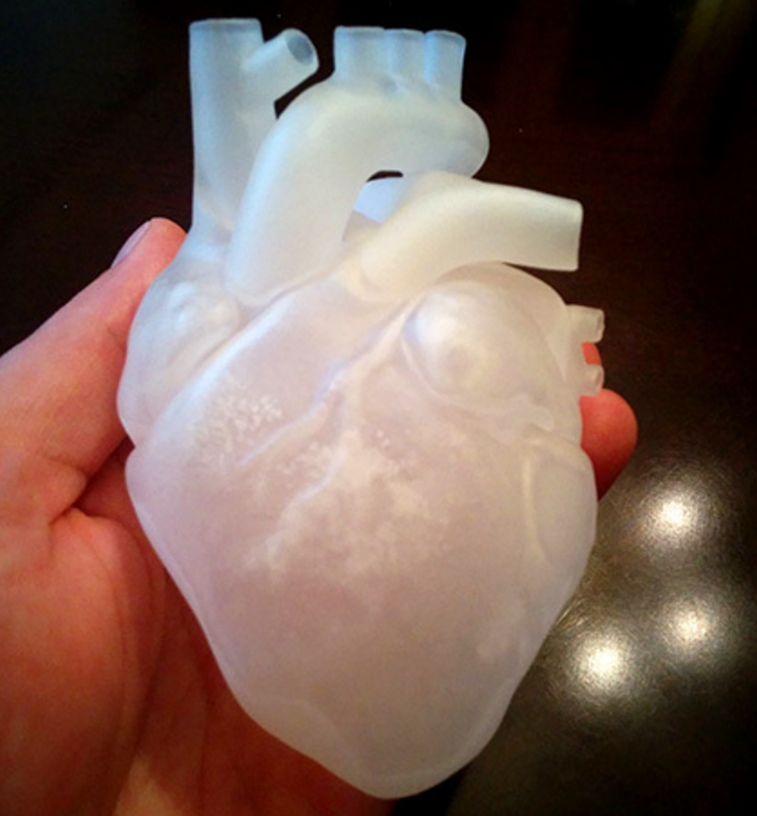 3dp_ten3dpthings_anatomical_heart_2
