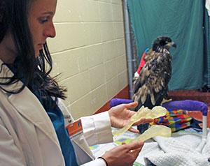 University of Illinois Veterinarians Use 3D Printing to Help With Eagle's Surgery
