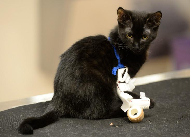 Sonic the Bionic: Doctors and Designers Team Up to Help Kitten With 3D Printed Prosthetic