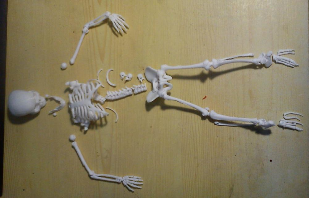3dp_ten3dpthings_articulatedanimals_skeleton_2