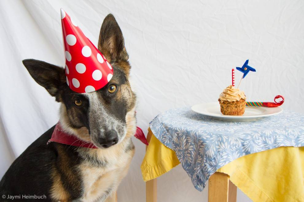 Where Can I Order A Dog Birthday Cake