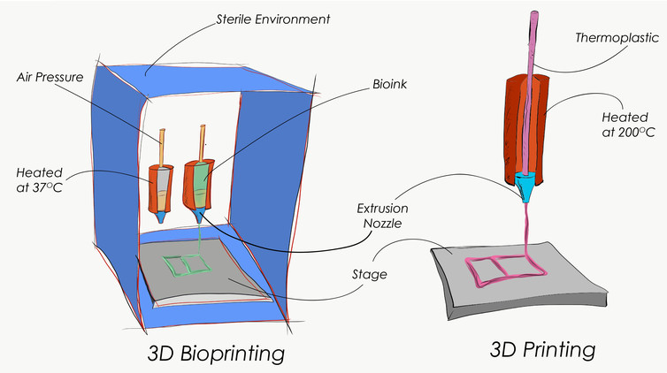 Why Drug Testing May Be the Most Important Application of 3D Bioprinting
