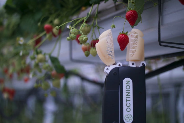 Replacing Human Hands with Octinion's Partially 3D Printed Strawberry Picking Robot