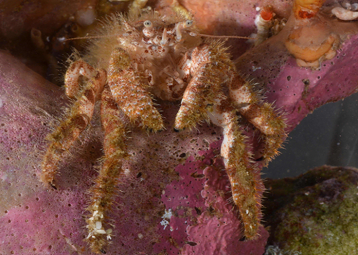 3D Scanning Helps Crabby Scientists Gather Data