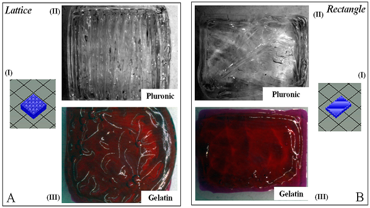Comparing Rectangular and Lattice Structures in 3D Printing Bioinks
